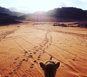 A journey through Jordan